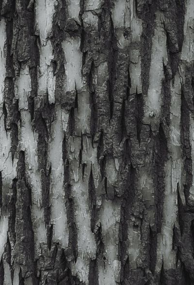 Patterns In Nature Patterns & Textures Textures Textures And Surfaces Textures In Nature Trees Tree Bark From My Polnt Of View Tree Bark Textures Backgrounds Black And White Patterns Black And White Textures Tree Bark Patterns Letgodhandleit I Love Trees Nature Nature Photography Rough Surfaces Surface Textures Jagged Edges Rough Texture Background Tree Trunk Jagged Surfaces From My Eyes To Yours April Showcase