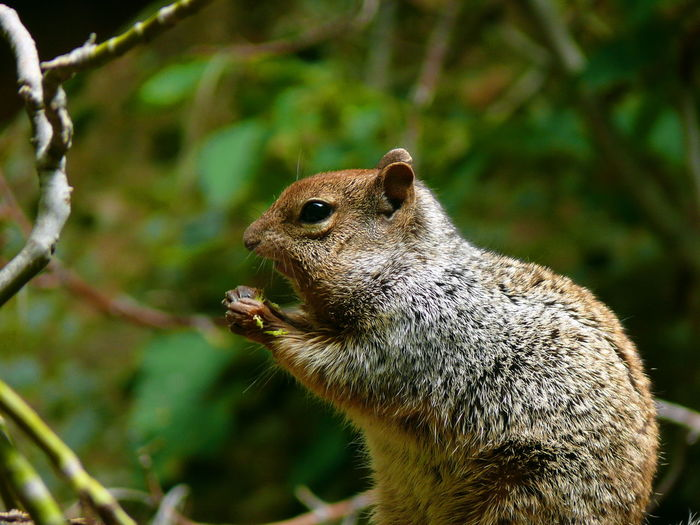 Close-Up Of Squirrel At Zion National Park