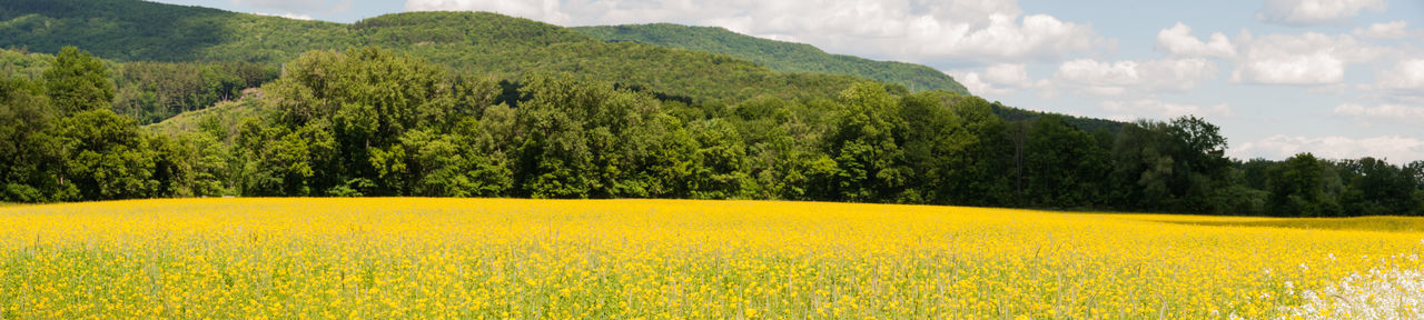 Field Nature Summer Tranqility Tranquility Vermont Yellow Flower Yellow Flowers