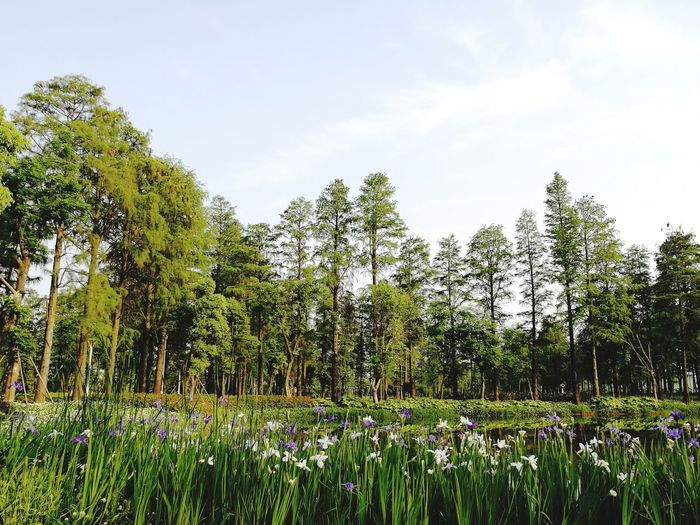 Scenic View Of Flowering Plants And Trees In Forest Against Sky