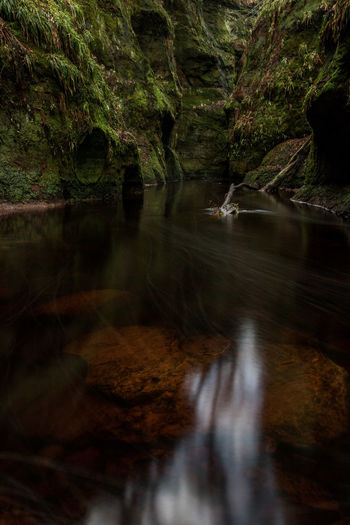 Devil's Pulpit in Schottland Devils Pulpit Scotland Drymen Brown Water Canon Canon EOS 750D 10-18mm Wide Angle Traveller Travel Destinations Travelling Travel Photography Tree Water Backgrounds River Full Frame Reflection Close-up Moss Growing Stream Tranquil Scene Calm Tranquility Flowing Water Forest
