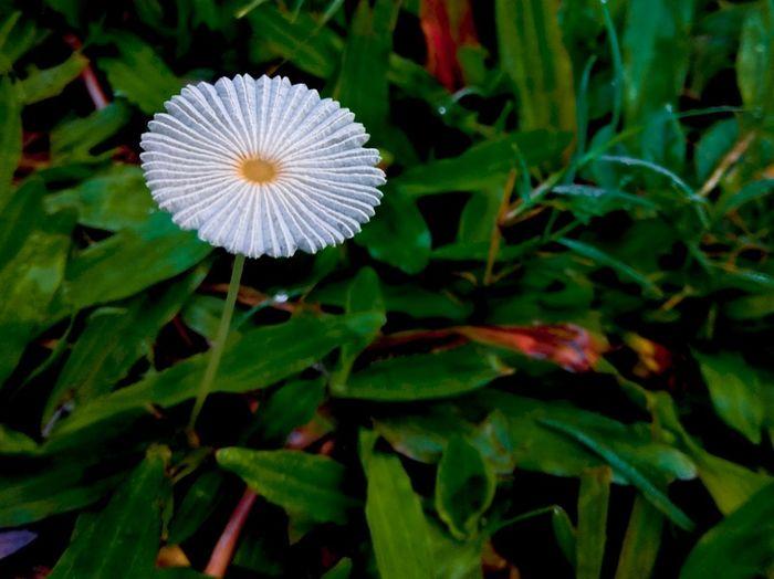 Flower...solo