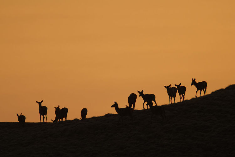 Silhouettes of the red deer in the mountains during sunset