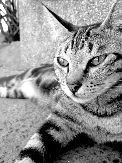 NINE. Eyeem Philippines EyeEmCDO Faces Of EyeEm EyeEm Best Shots Animal Photography Blackandwhitephotography MJBRPhotography Monochrome Popular Photos