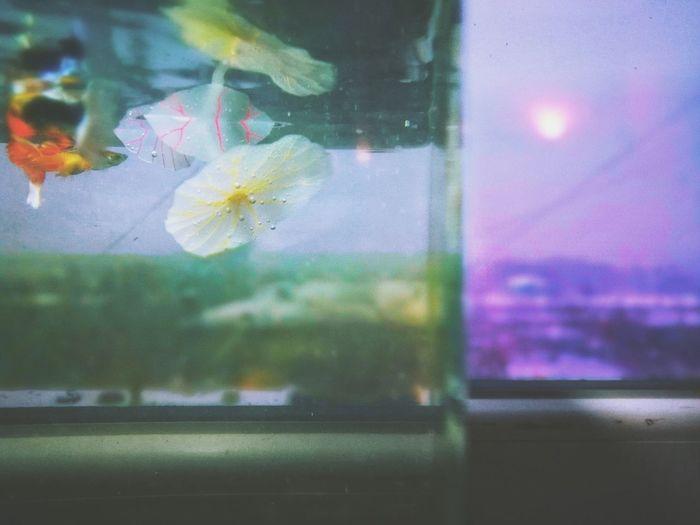 Indoors  Window Animals In Captivity No People Close-up Water Aquarium Night Nature Animal Themes Defocused Sky