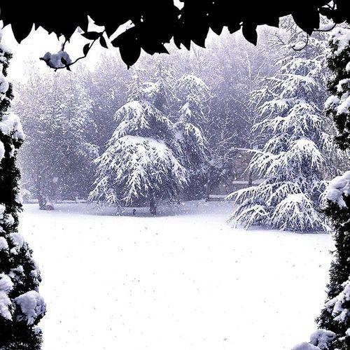 Snow is Falling Garden Snowcovered Snowstorm Beautyinwhite