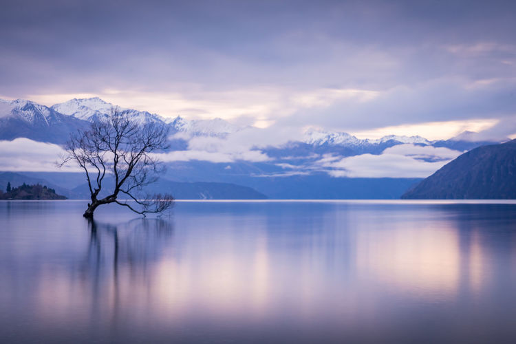 Long exposure photograph of the Lake Wanaka Tree with mountain range in the background. Scenics - Nature Lake Tranquil Scene Tranquility Reflection Tree Mountain Range No People Winter Water Wanaka Tree Wanaka Long Exposure Dreamy