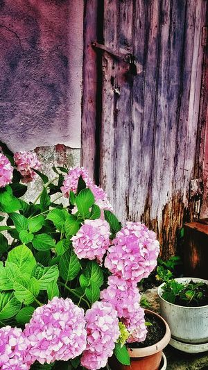 Beauty Green Colorful Life In Colors Doors EyeEm Nature Lover Suprise Nature Enjoy Life Flowers