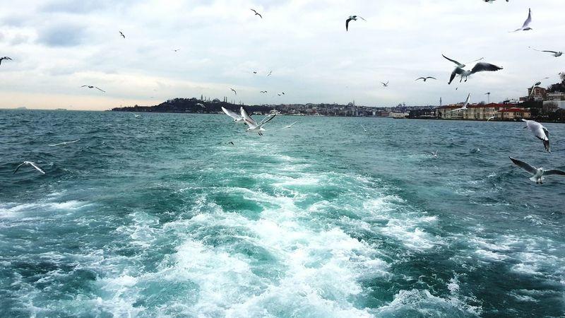 Bogazturu Istanbul Turkey Martılar Vapur