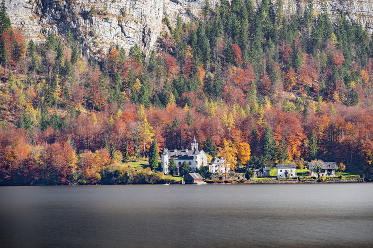 Scenic view of autumnal by trees during autumn