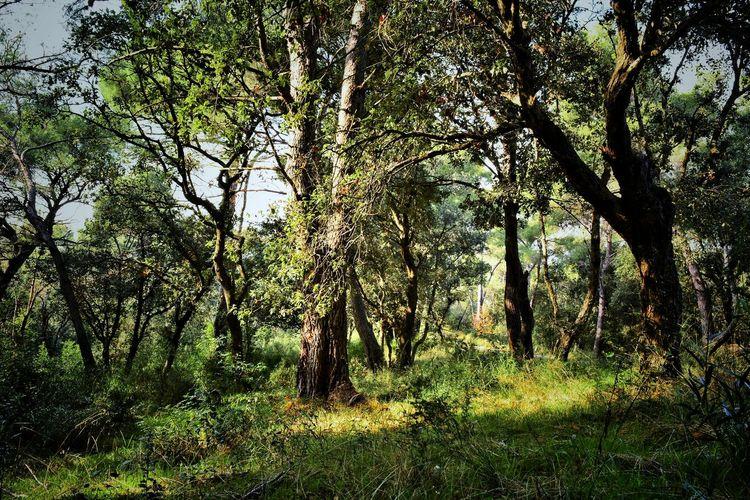 Landscape Landscape Tree Shadow Grass Green Color Forest WoodLand Woods