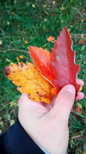 Leaf Autumn Outdoors Close-up Beauty In Nature Fragility Bokeh October 2016 Autumn 2016 How Is The Weather Today? Autumn🍁🍁🍁 Autumn Leaves Autumn Is The Spring Of Winter 🍂🍁 Autumn Is Here 🍂🍁 Autumn Colors Season  Get Closer Nature