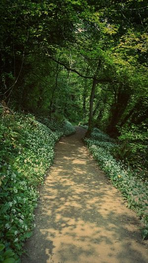 Bosherston Pembrokeshire Green Path Pembrokeshirecoastalpath Getaway  Green Nature Pathway In The Forest Taking Photos Woodlands Trail