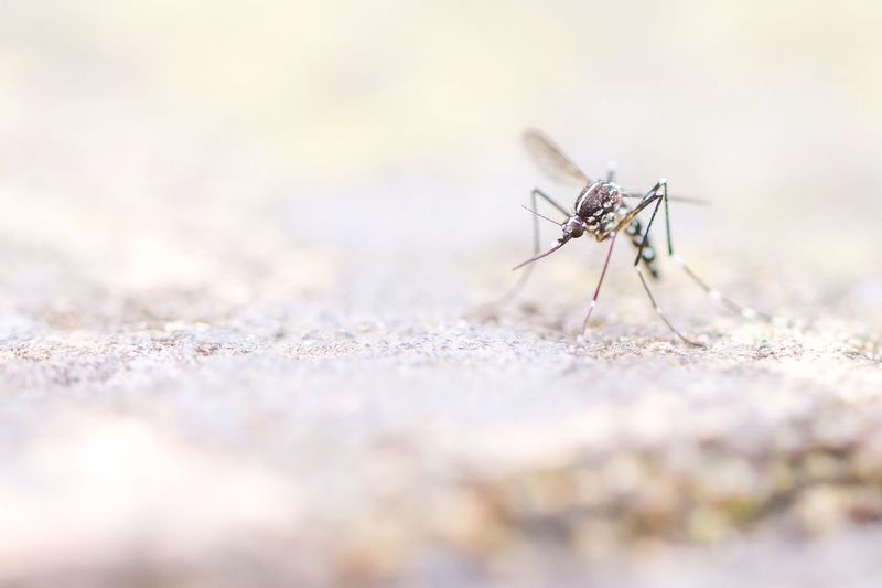 Mosquito on wall outdoors