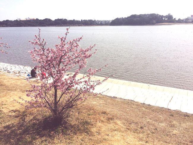 Nature Beauty In Nature Water Tree Outdoors Spring Sanaruko 佐鳴湖 浜松 Japan