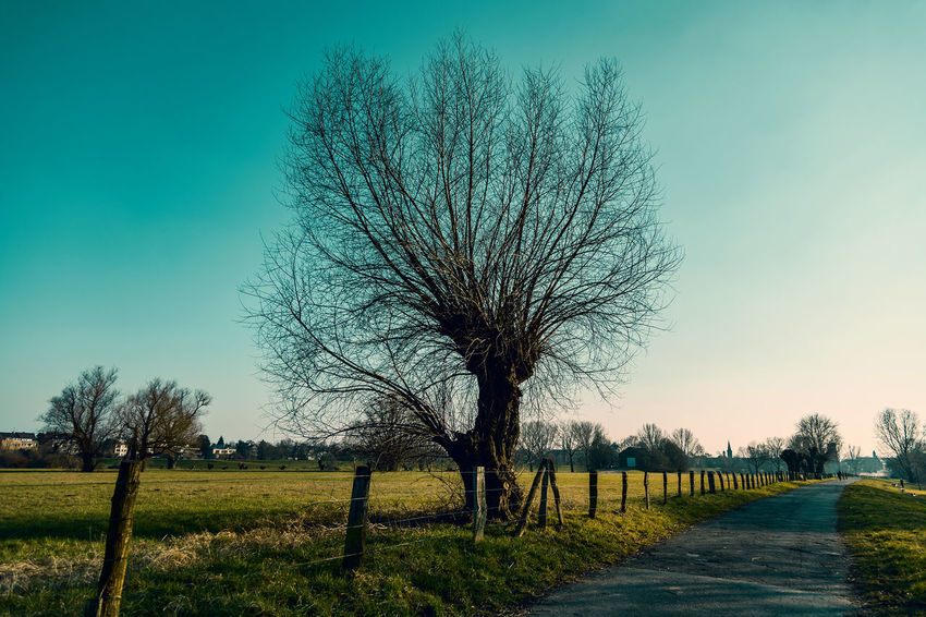 #kaiserswerthmeadows05 Path Bare Tree Beauty In Nature Clear Sky Day Environment Fence Field Grass Land Landscape Nature No People Outdoors Plant Scenics - Nature Sky Tranquil Scene Tranquility Tree
