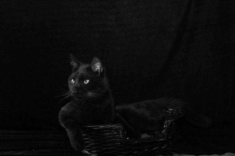 Cat sitting in basket against black background