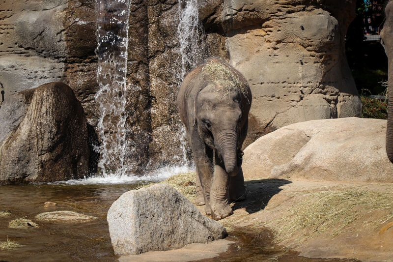 Elephant on rock at zoo