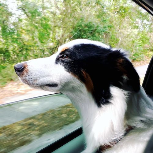 wind Dog Pets One Animal Domestic Animals Animal Head  Animal Themes Day Car Window No People Looking Through Window Outdoors Close-up Tree Mammal Nature Pet Portraits Pet Portraits