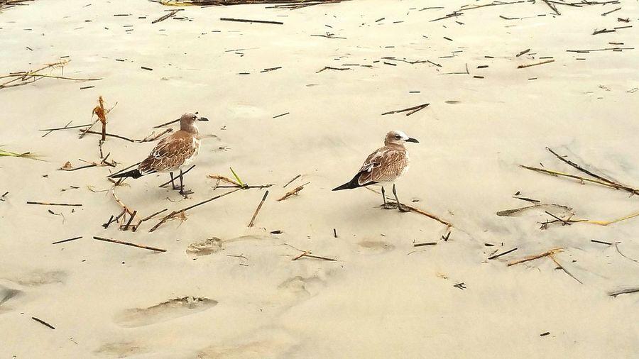 Sea Pines Bird Photography South Beach Marina Hilton Head Island Protecting Where We Play Seashore South Carolina