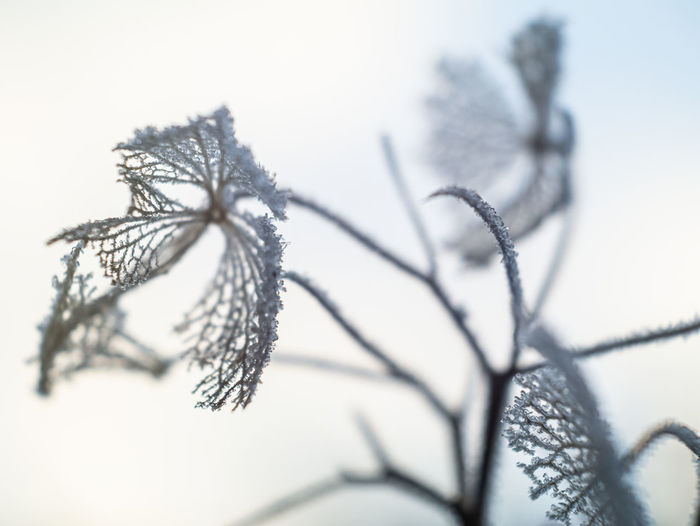 Close-up of dry plant during winter