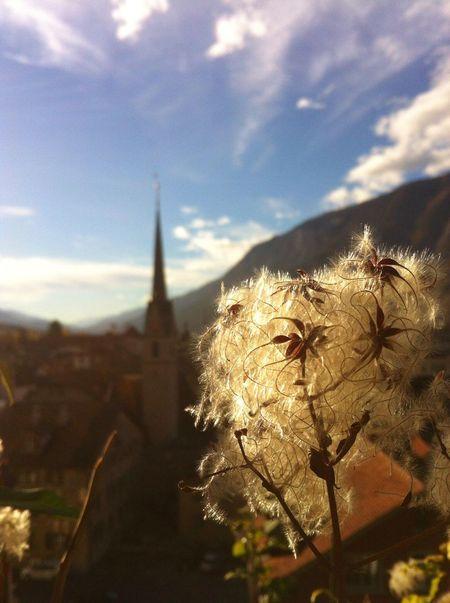 Sommeruntergang Church Calanda Reihn Clouds And Sky Clouds Sky Alps Switzerland Autumn Summer Ending Dry Flower  Flower Flowers Piante Chur Church Tower Afternoon Oktober