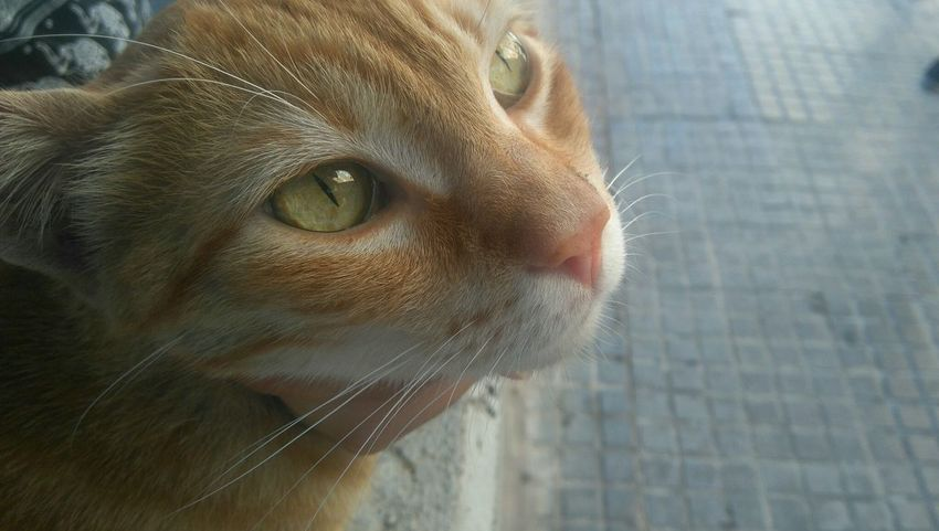 Cat Cute Green Eyes Animals City Surprises Good Days