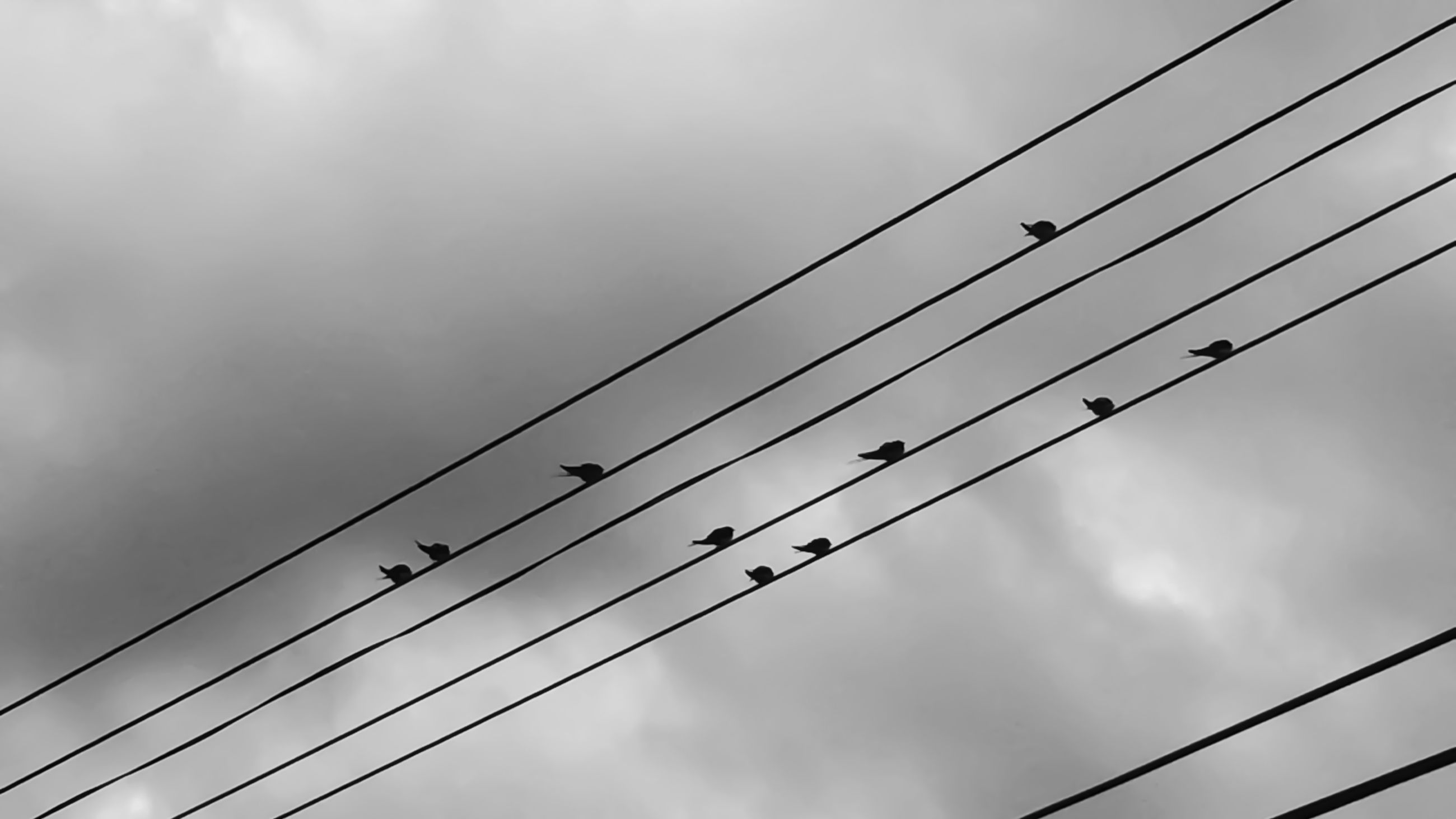 low angle view, power line, cable, sky, connection, electricity, cloud - sky, power supply, electricity pylon, cloudy, cloud, power cable, day, bird, transportation, technology, outdoors, pole, no people, rope