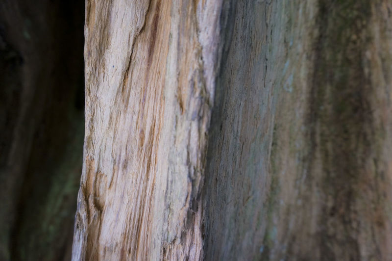Brown Close-up Cypress Cypress Trees  Natural Pattern Rough Selective Focus Surface Level Textured  Tree Tree Trunk Tree Trunks Weathered Wood Wood - Material Wooden Woods