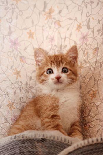 Portrait of kitten sitting on floor