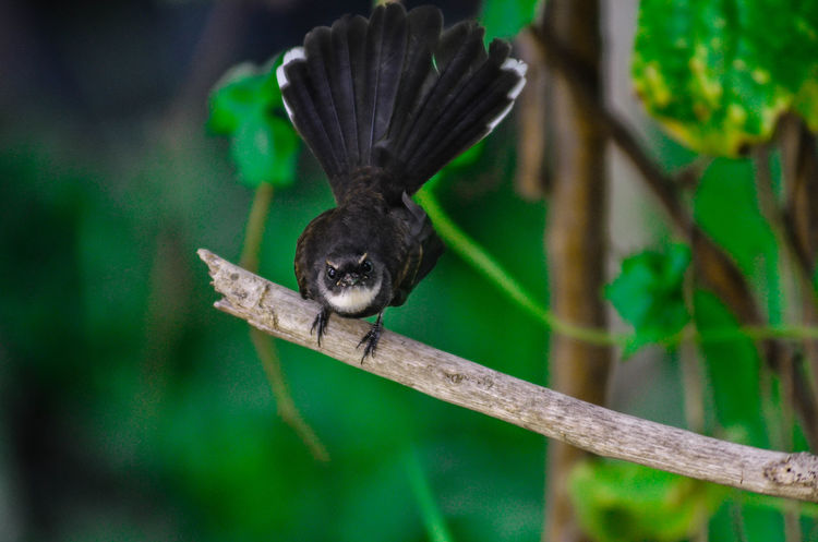 Animal Behavior Animal Themes Animals In The Wild Avian Beak Beetle Bird Black Color Close-up Focus On Foreground Nature No People One Animal Perching Selective Focus Wildlife Zoology