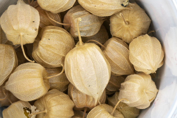Pile of fruits called phisalis create a yellow background