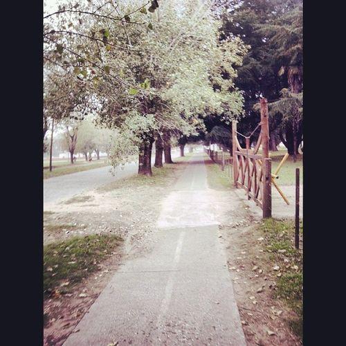 Ciudaddeazul Camino Arboles Tranquera Paisaje Rastasmgph