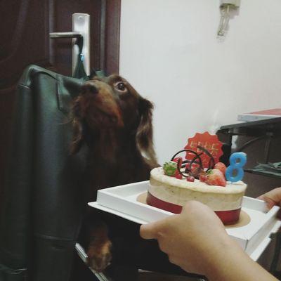 Yo, it's my birthday! Animal Themes Pets Dog Dog Love Dogs Of EyeEm Sausagedog Dog❤ Dachshund Dog Lover Cute Pets Doglover Dachshundlove I Love My Dog Doggie Happy Birthday! Enjoying Life