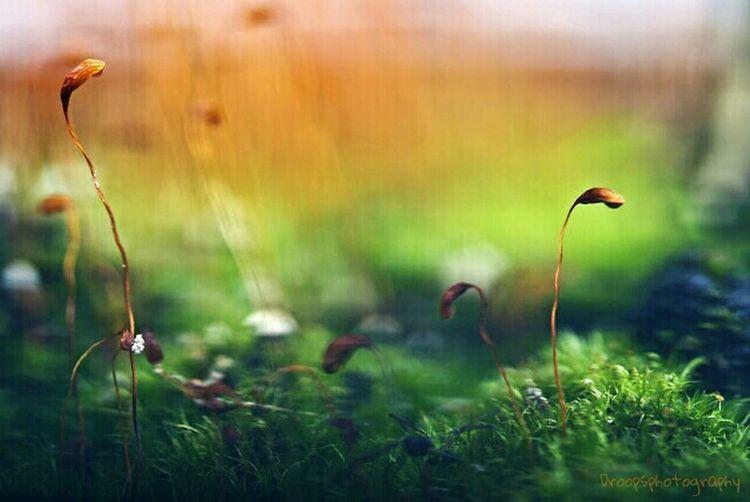 In wonderland... Macro Eye4photography  Eye4enchanting EyeEm Nature Lover