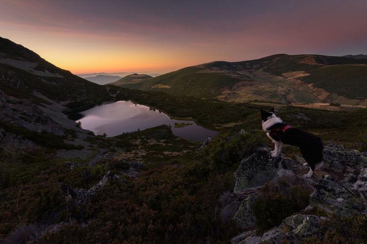 Dog Standing On Landscape Against Sky During Sunset