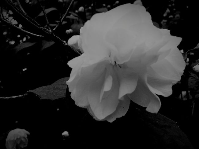 My Flower Obsession Black And White For My Friend Nature Beautiful Nature Flower Flower Collection