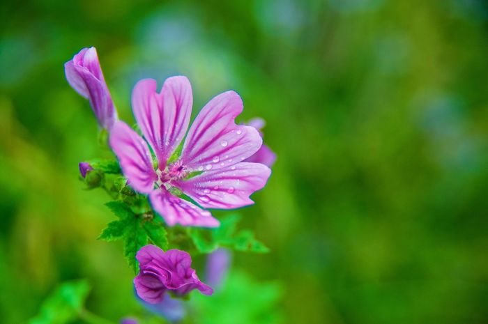 A purple spot Beauty In Nature Blooming Flower Flower Head Focus On Foreground Fragility Freshness Growth Nature Outdoors Pink Color Plant