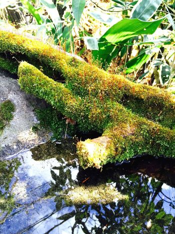Moss Garden Green Water Nature Spring