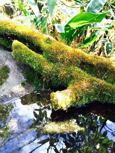 Moss Garden Green Water Nature Spring
