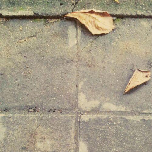 เหมือนใบไม้ใบเดียวที่หลงเหลือไว้ในป่า~* Leaf Floor