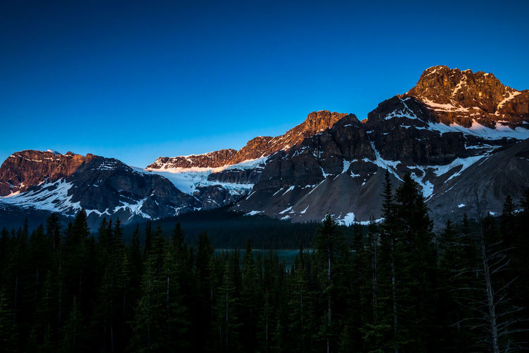 Beautiful Crowfoot Mountain and Glacier at Sunrise. On the scenic Icefields Parkway. In the Rocky Mountains of Alberta Canada, Banff National Park Mountain Scenics - Nature Beauty In Nature Sky Cold Temperature Tranquil Scene Tree Mountain Range Tranquility Snow Environment No People Plant Nature Clear Sky Snowcapped Mountain Blue Non-urban Scene Outdoors Formation Mountain Peak Pine Tree