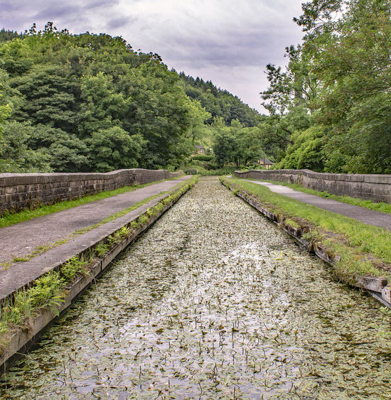Cromford Canal in Green... Disused Canal Overgrown Beauty In Nature Canals And Waterways Green Color Growth Nature No People Outdoors Sky Transportation Tree