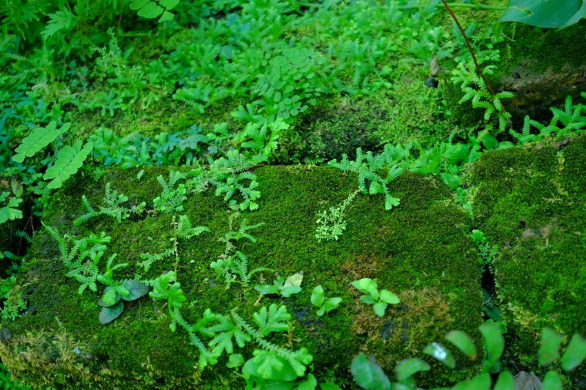 Moss Plant Moss Plant Green Color Nature Moss Full Frame Plant Part Backgrounds Lichen