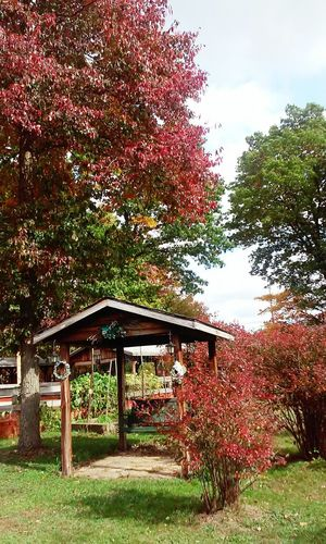 Colorful Red Green Nature Outdoors No People Day Plants 🌱 Rustic Rural Scene No Animals Close To Home Leaves Fall Beauty Non-urban Scene Built Structure Wooden Swing Trees United States Bench