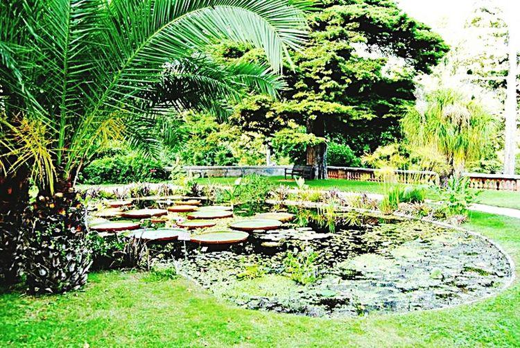 Jardins Rameh Côte D'Azur Provence Menton Ninfee Menton Jardins Rameh Jardinbotanique Waterlilies La Cote D'Azur Waterlily
