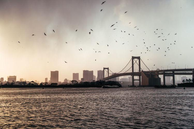 Birds flying over city