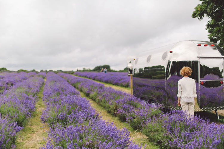 Rear View Of Standing By Motor Home On Lavender Field