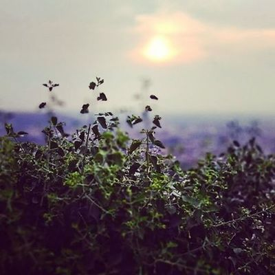 Nature has its own beauty, which u can't define in wordsGwalior Gwaliorfort Googlecamera Redmi2Prime Phonecamera Madhyapradeshtourism Madhyapradesh Bulleteers Karizma Royalenfield Sundayevening Ride Explore