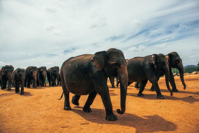 SriLanka Zoo Elephant Elephants Outdoors Wildlife Be. Ready. EyeEmNewHere